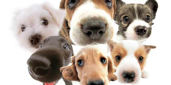 a-lot-of-dogs.jpg